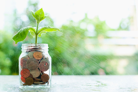 Water spraying the plant growing from coins in the glass jar on blurred green natural background with copy space for business and financial growth concept