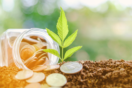 Plant growing from soil with coin in the glass jar against blurred natural green background, sun light effect and copy space for investment, business, finance and money growth concept
