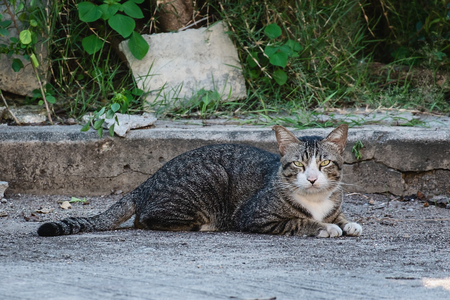 The cat lying on the street for pet and animal concept