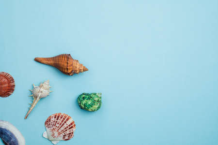 Sea shells on blue background for decoration and travelling concept