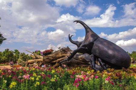 Unicorn beetle Stock Photo - 19178462