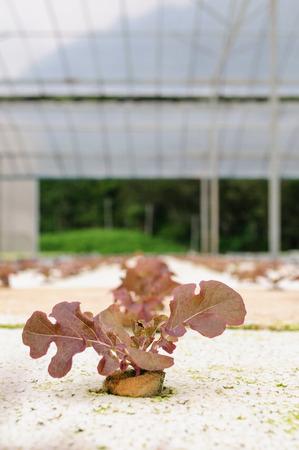 nontoxic: Non-toxic vegetable garden