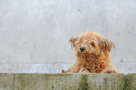 dumped: It looked like a dirty dog