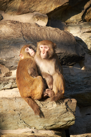 macaque: deux macaque assis ensemble