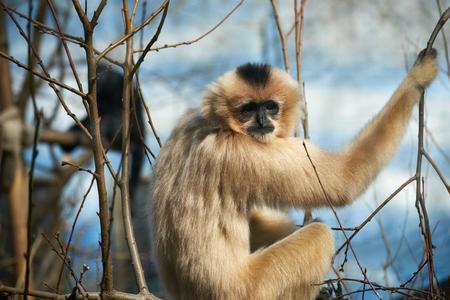 ape: ape on the tree