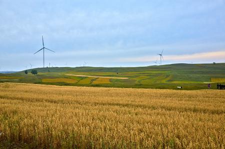 grassland: grassland scenery