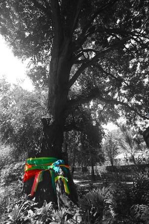 thai believe: spirit tree Stock Photo