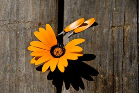 Love me not daisy  Stock Photo