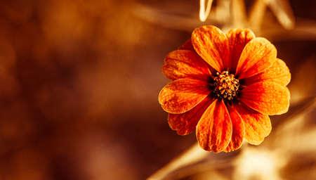 Red Flied flower  Stock Photo