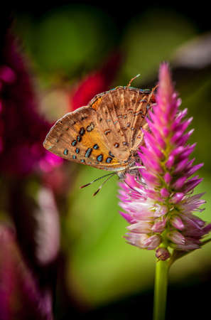 Butterfly and purple pink flowers  photo
