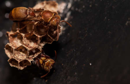 Wasp and next  Stock Photo
