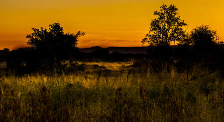 bosveld: Sunset landscape  Stock Photo