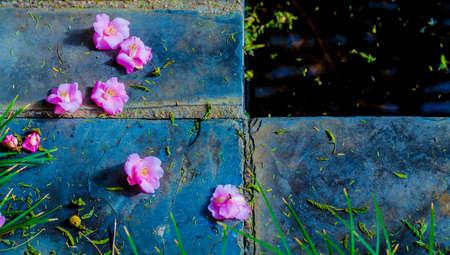 Pink flowers waters edge