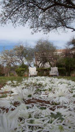wedding chairs: Garden wedding chairs display