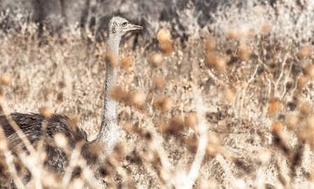Ostrich fine arts contemporary art