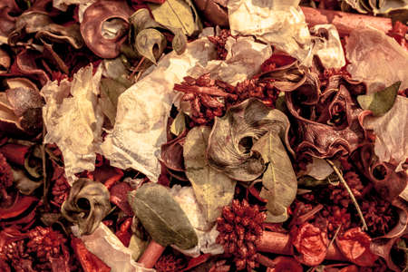 Dried petals and seeds background