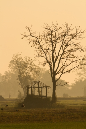 murk: old hut in the foggy morning