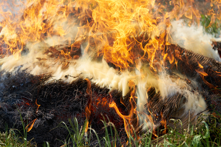 burned out: straw fire,flame background