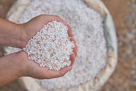 amoniaco: close up farmer woman hand hold chemical Fertilizer over fertilizer sacks.