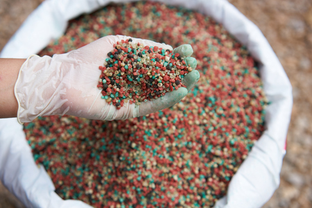 fertilizer in farmer hand over fertilizer bag.