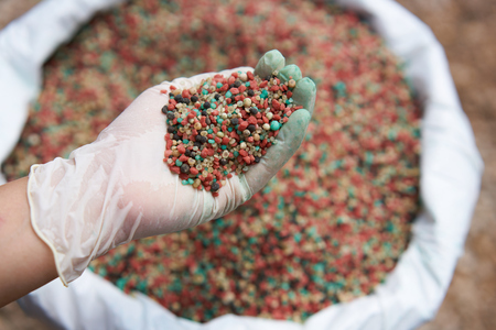 fertilizer in farmer hand over blur fertilizer bag background. 스톡 콘텐츠
