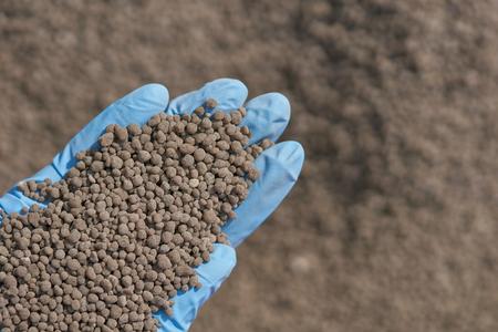 18-46-0 , Diammonium phosphate (DAP) fertilizers in researcher hand .she ware  blue rubber gloves, to research on nutrient and fertilizer management. Reklamní fotografie