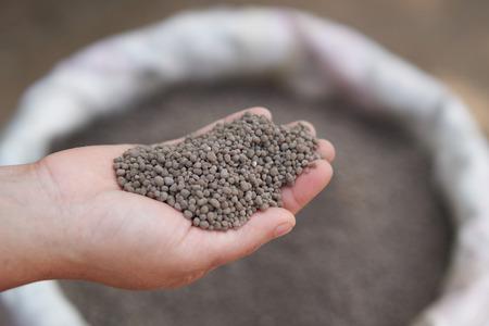 18-46-0, Fertilizantes de fosfato diamónico (DAP) en manos de los agricultores. Foto de archivo - 93306693