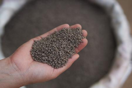 18-46-0 , Diammonium phosphate (DAP) fertilizers in farmer hand .