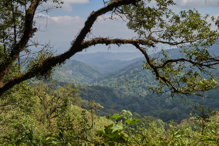 The branches of the big trees in the jungle.The mountains are complicated.