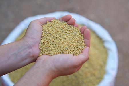 Diammonium phosphate (DAP), 전형적인 공식은 18-46-0, 농부의 손에 식물을위한 노란색 color.fertilizer입니다.