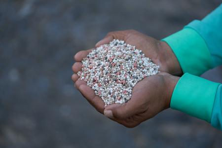 Bulk Blend Fertilizer in farmer hands. 版權商用圖片 - 127061790