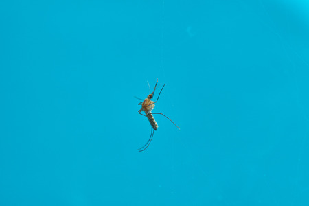 Mosquito on blue background Stok Fotoğraf