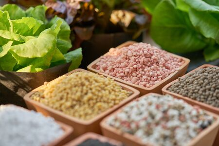 Six types of chemical fertilizers in clay pots and salad leaves Stok Fotoğraf