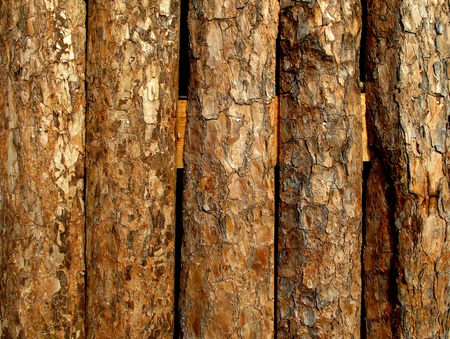 Wood wall from old log in rural area  Stock Photo