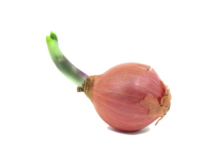 Shallot with leaflet sprout on white background Stock Photo - 13566367