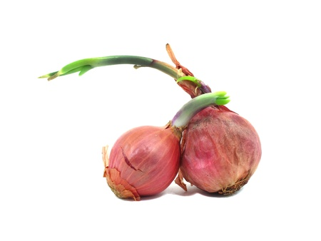 Two shallots with leaflet sprout on white background Stock Photo