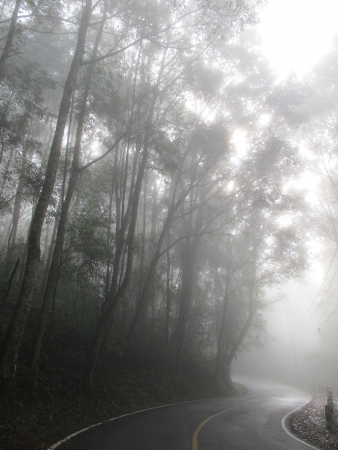 Curve road in the mist beside forest Stock Photo