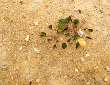 Small plant grow on dry ground with space photo