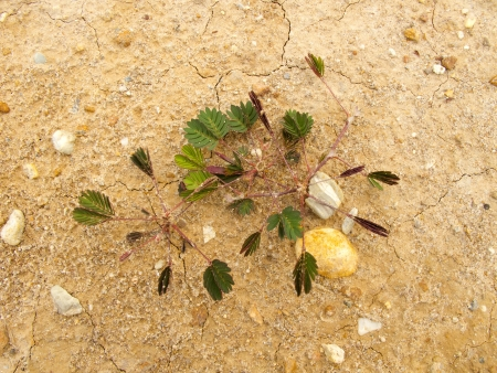 Small plant on dry ground with small rock photo