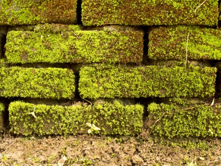 Brick wall full with green moss and ground photo