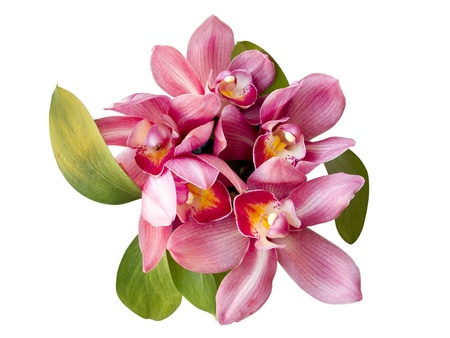 Bouquet of pink orchid isolated on white background Stock Photo