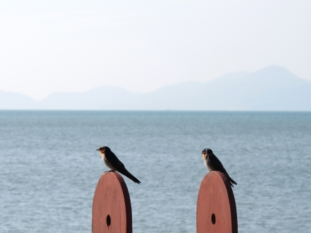 Two birds sitting on posts with sea in background