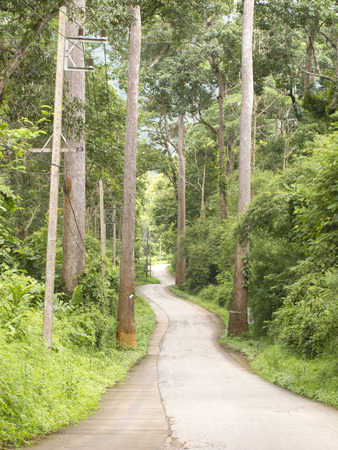 Curved road in forest on hill in Chiang Dao, Chiang Mai, Thailand