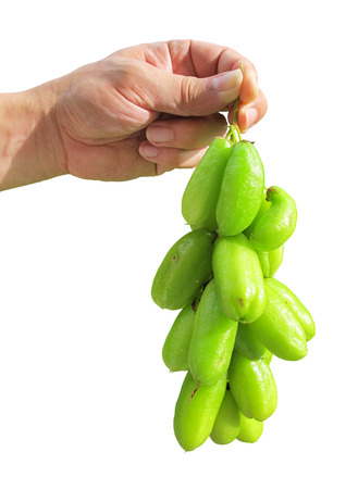 Bilimbi (Averhoa bilimbi Linn.) or cucumber fruits on humand hand isolated with clipping path