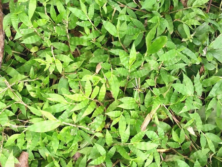 Green leaves cover on ground