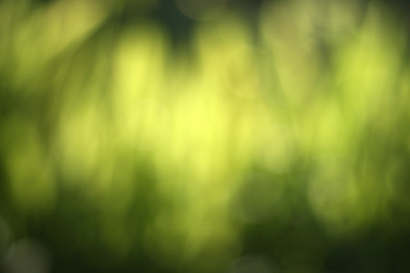 Abstract nature green blur background from leaf