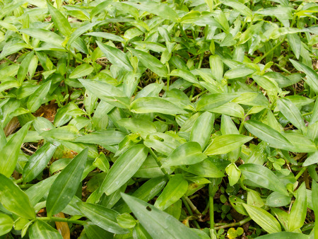 Close up fresh green grasses weed on ground Stock Photo