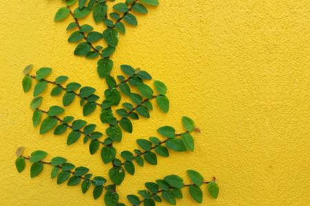 Coatbuttons Mexican daisy plant on yellow wall with space