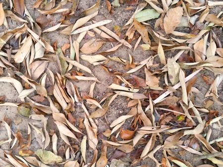 Many dry leaves fall on ground as background