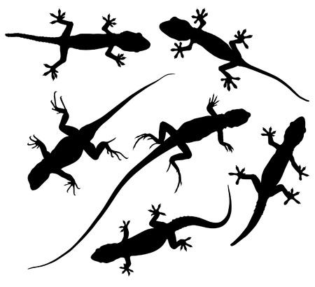 lagartija: Lizard Silueta sobre fondo blanco